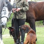 Sasza zaprzyjaźnia się z nowymi końmi